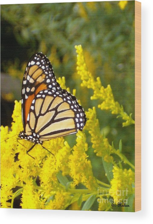 Monarch Wood Print featuring the photograph Monarch by Sara Raber
