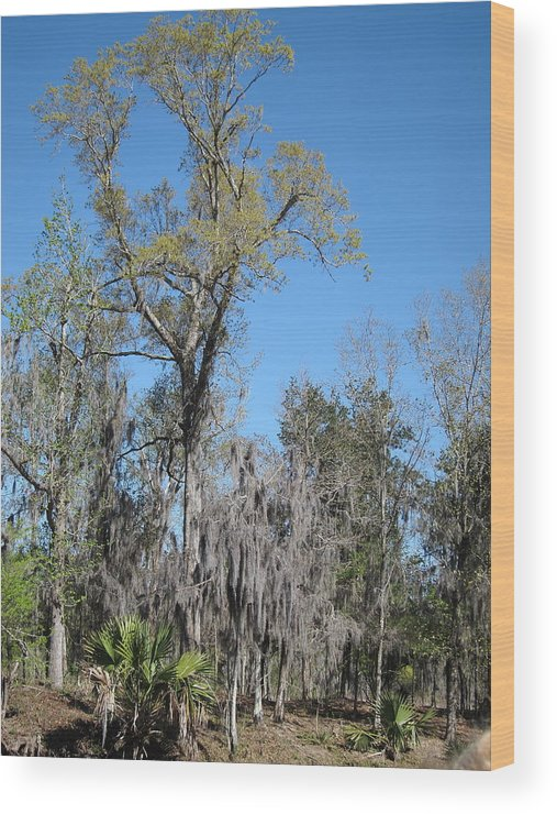 New Wood Print featuring the photograph New Orleans - Swamp Boat Ride - 121265 by DC Photographer