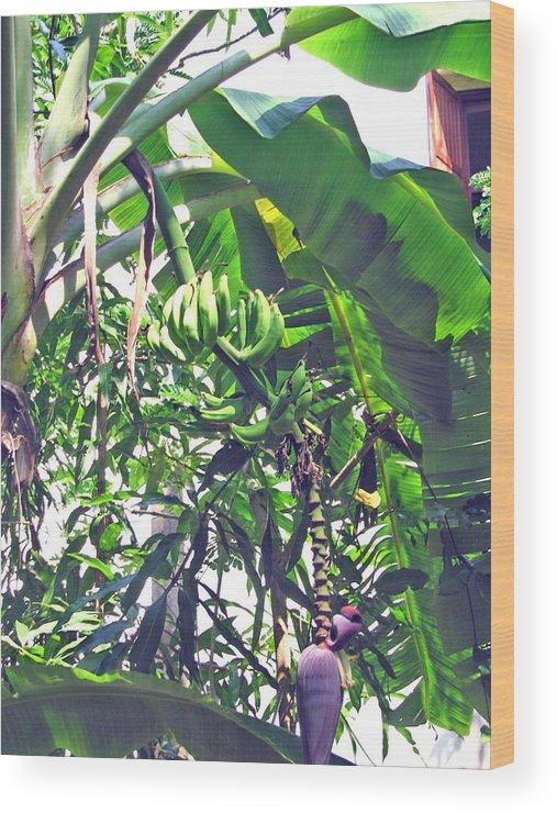 Banana Wood Print featuring the photograph Nosy Komba Banana Palm by Jay Milo