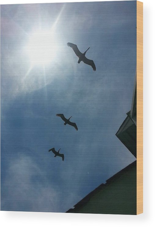 Pelicans Wood Print featuring the photograph Pelican Flight by Robert Scarborough