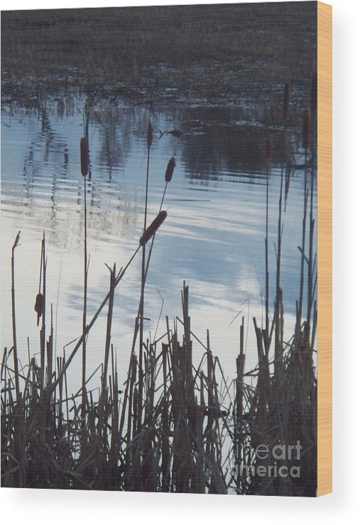 Landscape Wood Print featuring the photograph Pond At Twilight by Eric Schiabor
