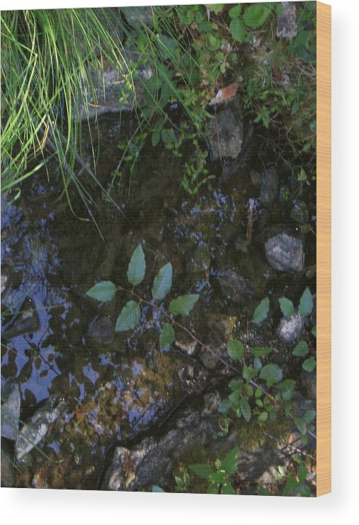 Water Wood Print featuring the photograph Quiet Brook In The Mountains by Terri Prall