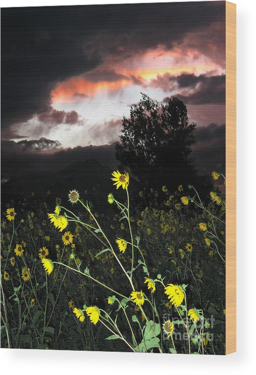 Sunset Wood Print featuring the photograph Socorro Sunset by Steven Ralser