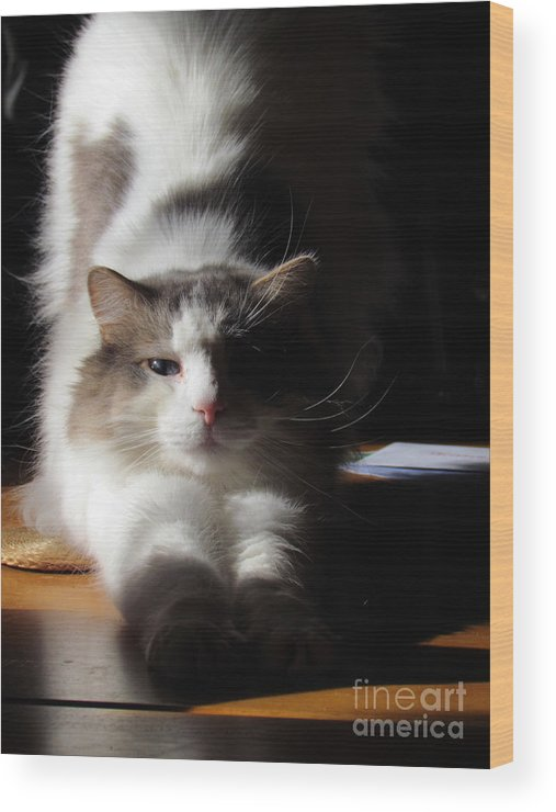 Cat Wood Print featuring the photograph Ste-rrrr-etch by Lili Feinstein