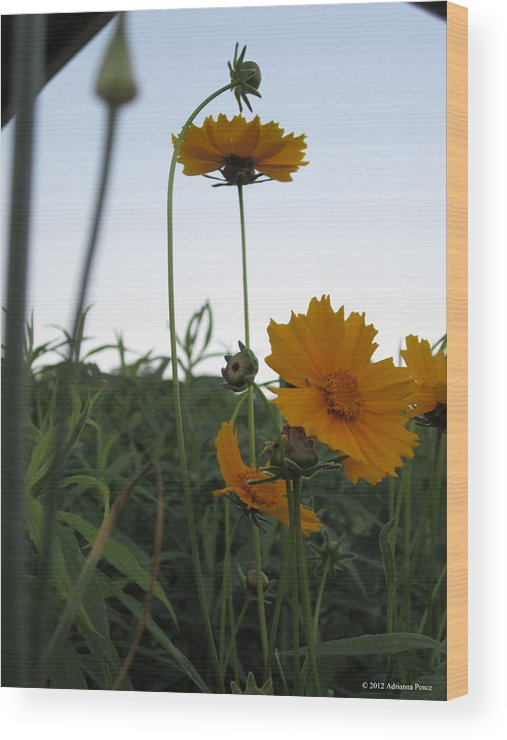 Flowers Wood Print featuring the photograph Summer Wild Flowers by Adrianna Pence