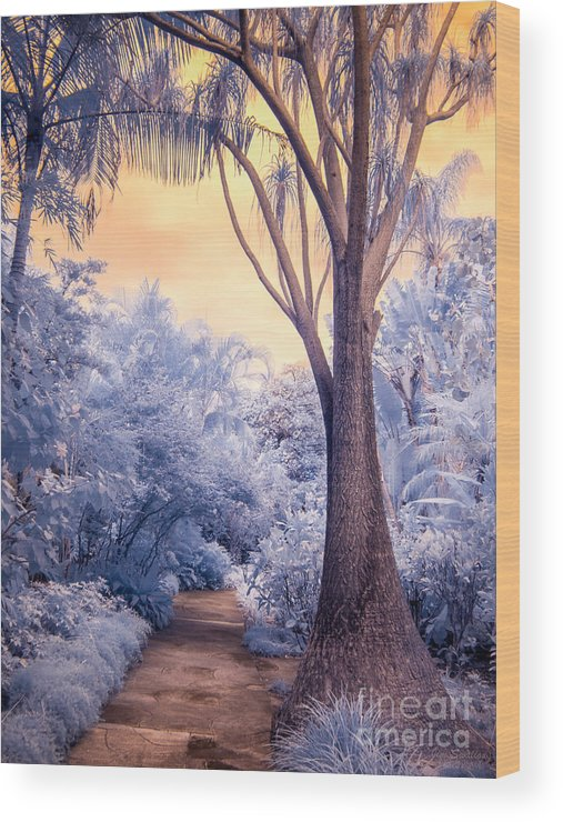 Infrared Wood Print featuring the photograph Saint Petersburg Sunken Gardens Path In Infrared by Jim Swallow