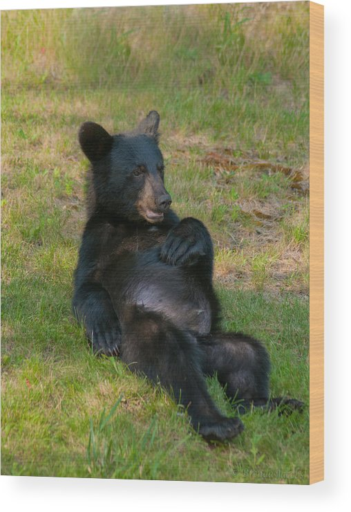 Bears Wood Print featuring the photograph Taking A Break by Brenda Jacobs