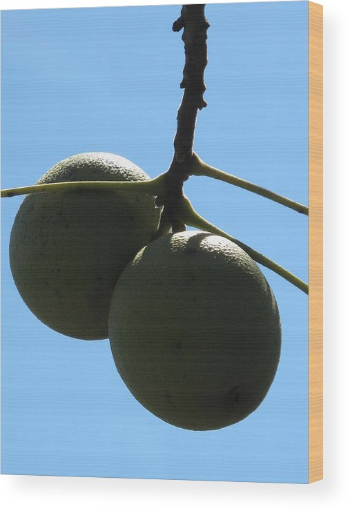 Black Walnuts Wood Print featuring the photograph The Green Twins by Frank Chipasula