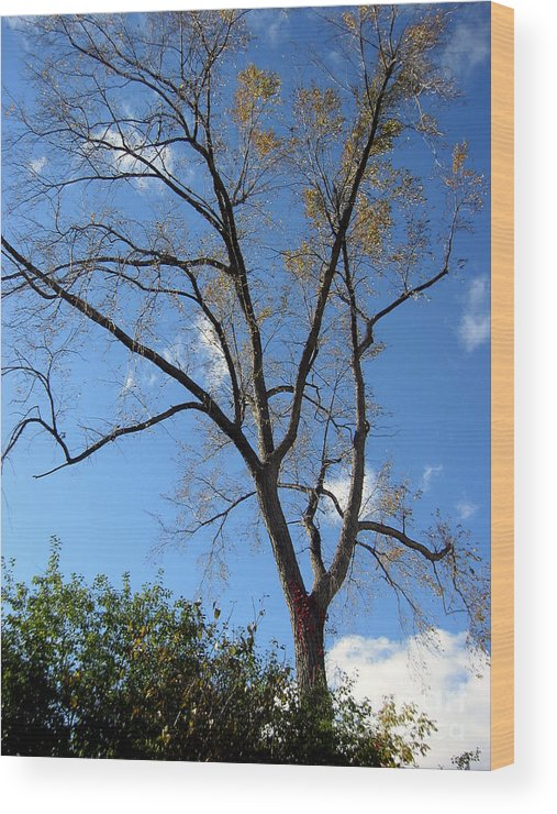 Landscape Wood Print featuring the photograph Tree Under Blue Sky by Andre Paquin