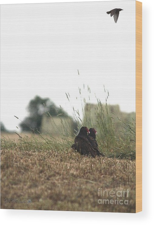 Mccombie Wood Print featuring the painting Turkey Vultures by J McCombie