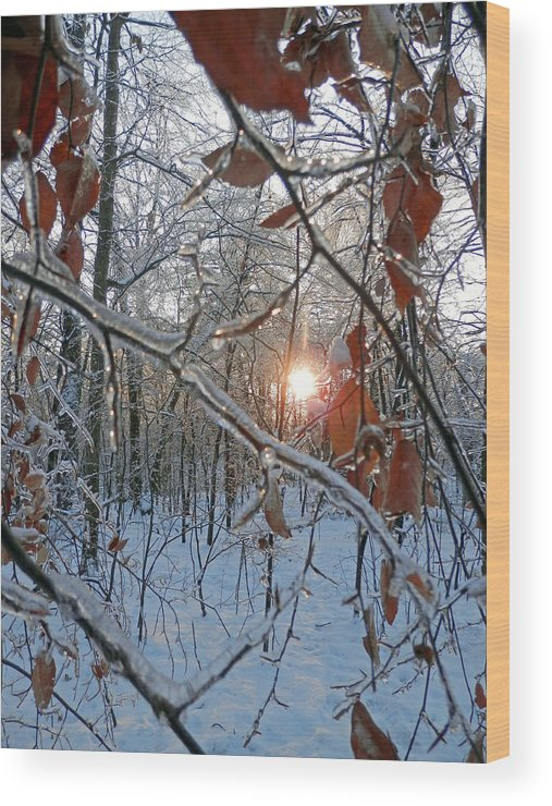 Winter Wood Print featuring the photograph Winter Sunset 2 by Pema Hou