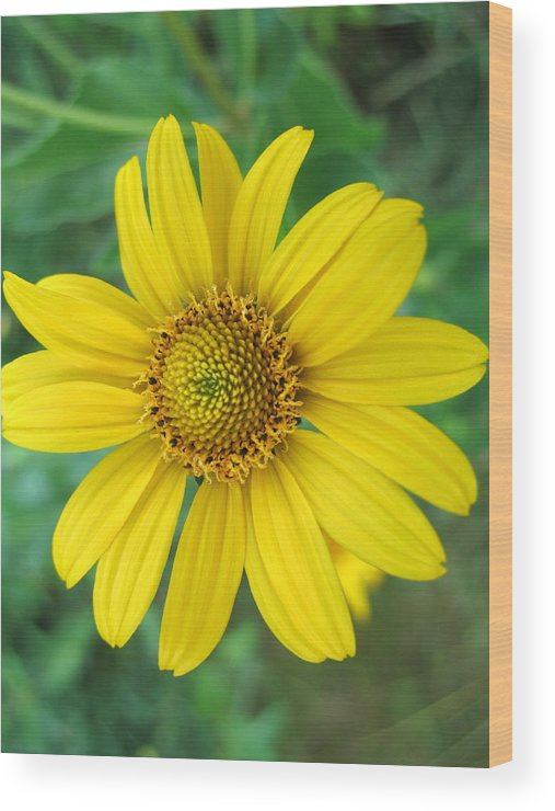 Flower Wood Print featuring the photograph Yellow Jewel by Gregory Yost