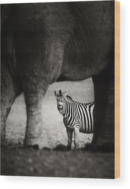 Wild Wood Print featuring the photograph Zebra Barking by Johan Swanepoel