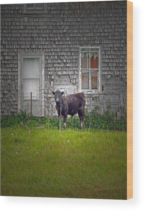 Abandoned House Wood Print featuring the photograph Abandoned Cow House - Barrow Bay by Cyryn Fyrcyd