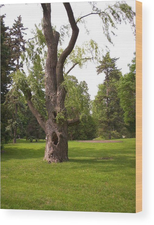 Tree Wood Print featuring the photograph Knurled Tree by Corinne Elizabeth Cowherd