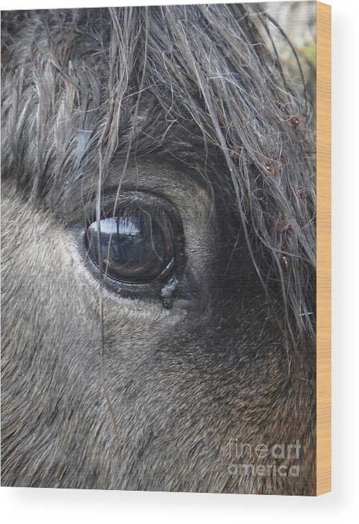 Horse Wood Print featuring the photograph Acceptance by Nika One