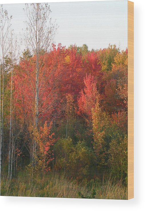 Landscape Wood Print featuring the photograph Autumn Days by Hollie Cyr