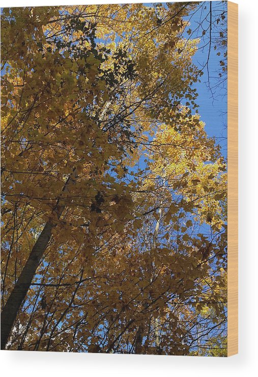 Carson City Wood Print featuring the photograph Blue Sky by Joseph Yarbrough