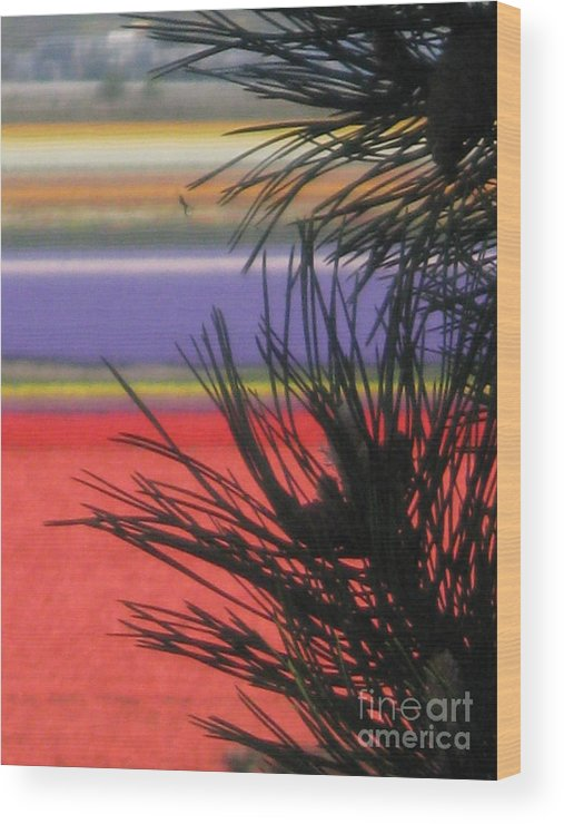 Evergreen Wood Print featuring the photograph Evergreens And Tulips by Kim Frank
