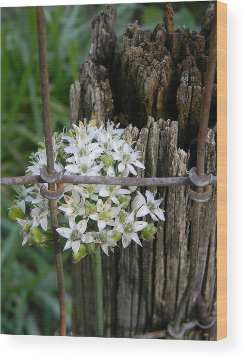 Fence And Flower Wood Print featuring the photograph Fence And Flower by Warren Thompson