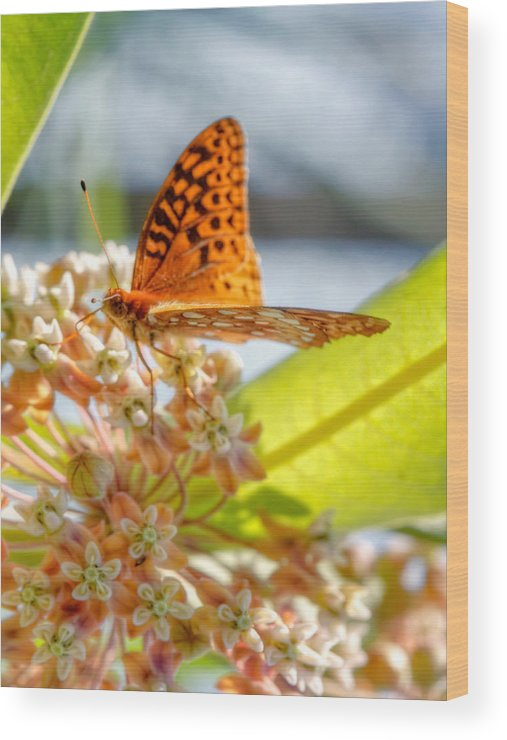 Wood Print featuring the photograph Great Spangled Fritillary Butterfly by Jenny Ellen Photography