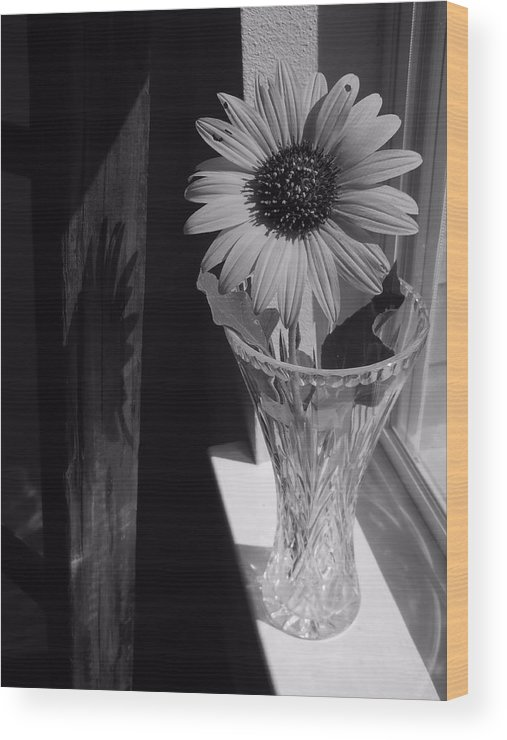 Sunflower Wood Print featuring the photograph In The Window by Lynnette Johns