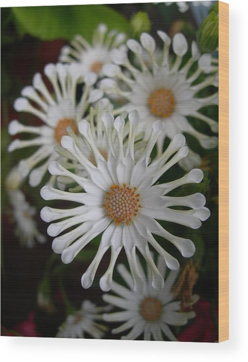 Flowers Wood Print featuring the photograph Longwood Wonders by Sheila Rodgers