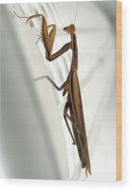 Mantis Wood Print featuring the photograph Mantis by Alessandro Della Pietra