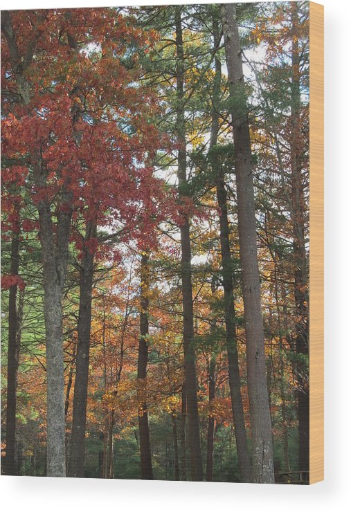 Nature Wood Print featuring the photograph Orange Woods by Loretta Pokorny