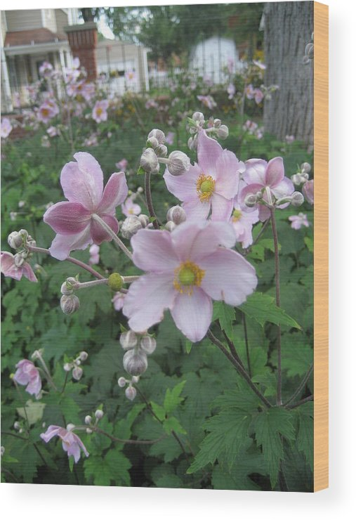 Flowers Wood Print featuring the photograph Peeking Out by Carol Steele