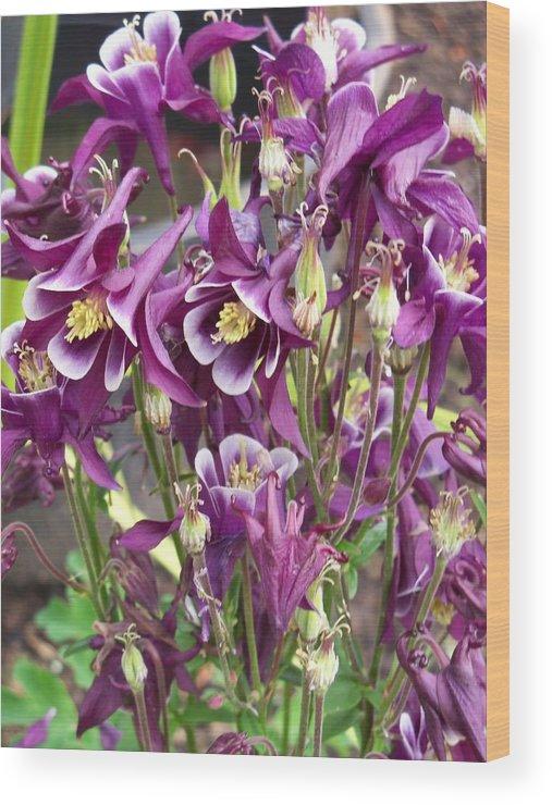Flower Wood Print featuring the photograph Purple Columbine by Corinne Elizabeth Cowherd