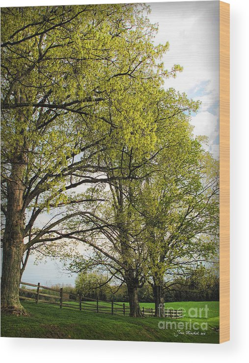 Spring Wood Print featuring the photograph Spring Awaits by Joan Minchak