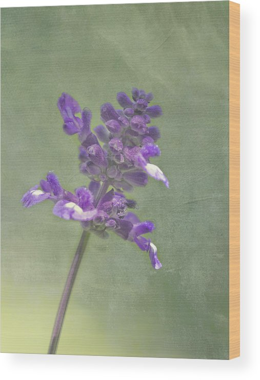 Purple Wood Print featuring the photograph Summer Sage by Cheryl Butler