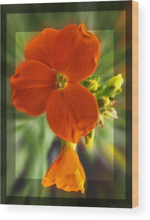 Nature Wood Print featuring the photograph Tiny Orange Flower by Debbie Portwood