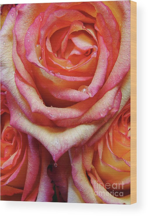 Roses Wood Print featuring the photograph Weepy Woses by Mark Holbrook