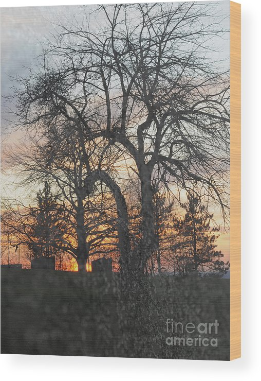 Tree Wood Print featuring the photograph Winter Freeze by Luke Moore