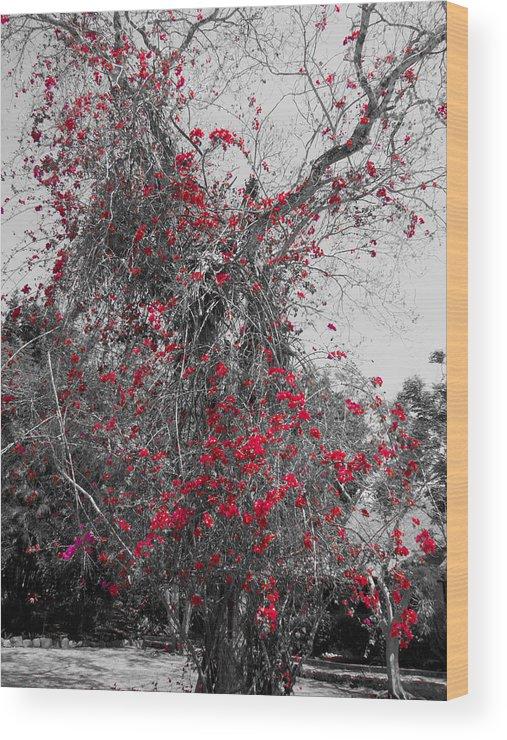 Bougainvillea Wood Print featuring the photograph Bougainvillea Invasion by Douglas Barnard