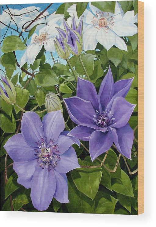 Clematis Wood Print featuring the painting Clematis 2 by Jerrold Carton