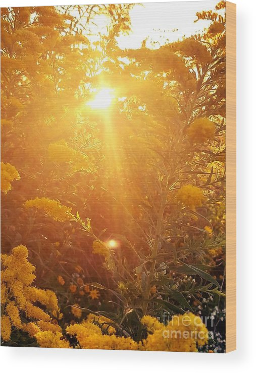 Golden Days Of Autumn Wood Print featuring the photograph Golden Days Of Autumn by Maria Urso