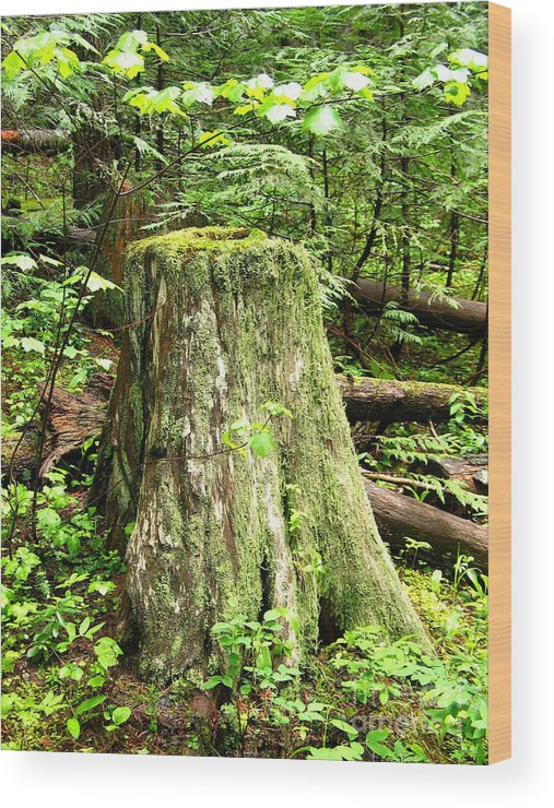 Moss Wood Print featuring the photograph Transition by Idaho Scenic Images Linda Lantzy
