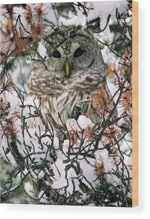 Owl Wood Print featuring the photograph What A Hoot by Lisa Jacob