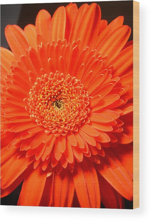Gerber Photographs Wood Print featuring the photograph 3286 by Kimberlie Gerner