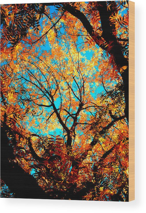 Trees Wood Print featuring the painting Afternoon by Tim Tanis