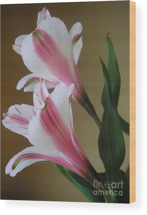 Nature Wood Print featuring the photograph Alstroemerias - Doubled by Lucyna A M Green