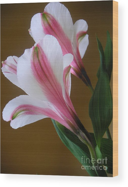 Nature Wood Print featuring the photograph Alstroemerias - Together by Lucyna A M Green
