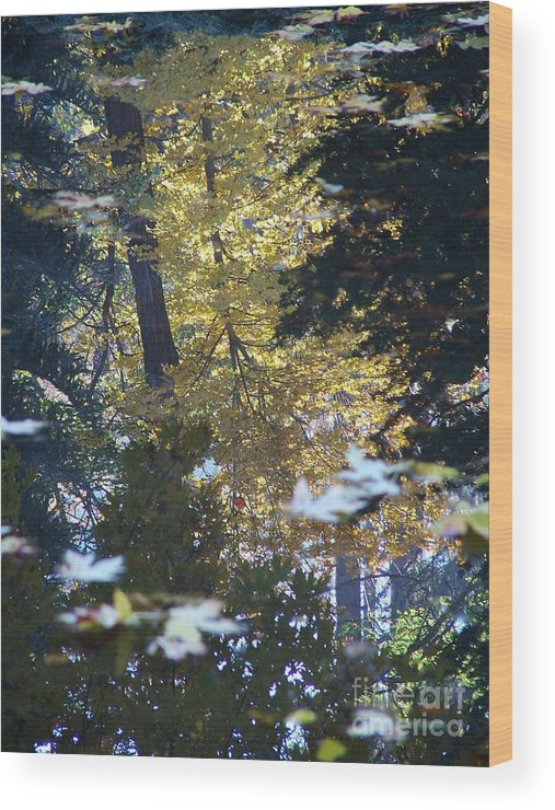 Nature Wood Print featuring the photograph Ashland Reflections by John Loyd Rushing