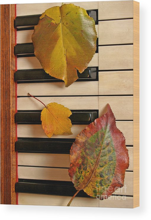 Piano Wood Print featuring the photograph Autumn Leaf Trio On Piano by Anna Lisa Yoder
