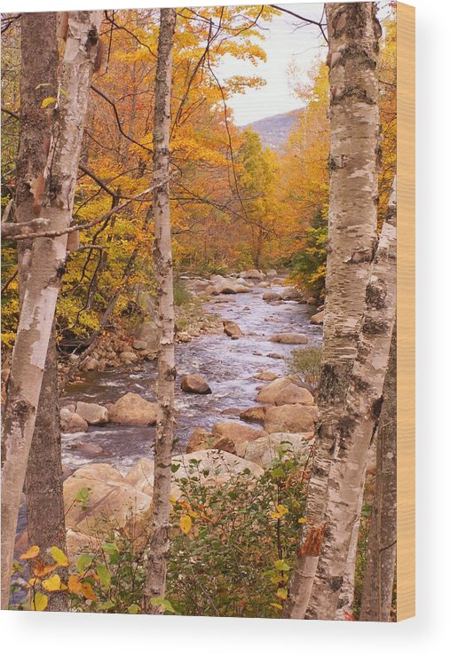 Landscape Wood Print featuring the photograph Birches On The Kancamagus Highway by Nancy Griswold