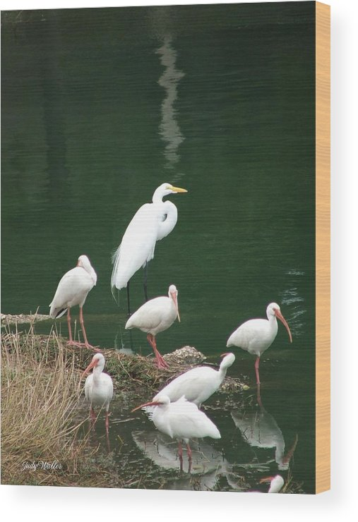 Birds Wood Print featuring the photograph Birds On 17th Street Pond by Judy Waller