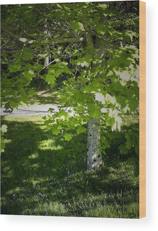Irish Wood Print featuring the photograph Bluebells In Killarney National Park Ireland by Teresa Mucha